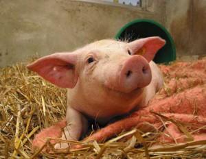 Мясо: мифы и факты
